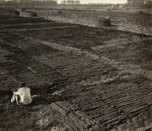 Turfwinning nabij Rotterdam, 1918