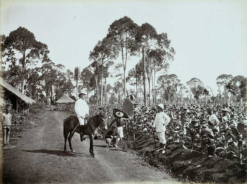 Deli, Sumatra, plantage